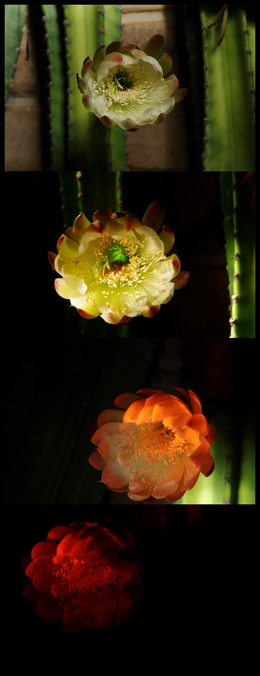 [Image: http://nfggames.com/grafx/cactus.jpg]